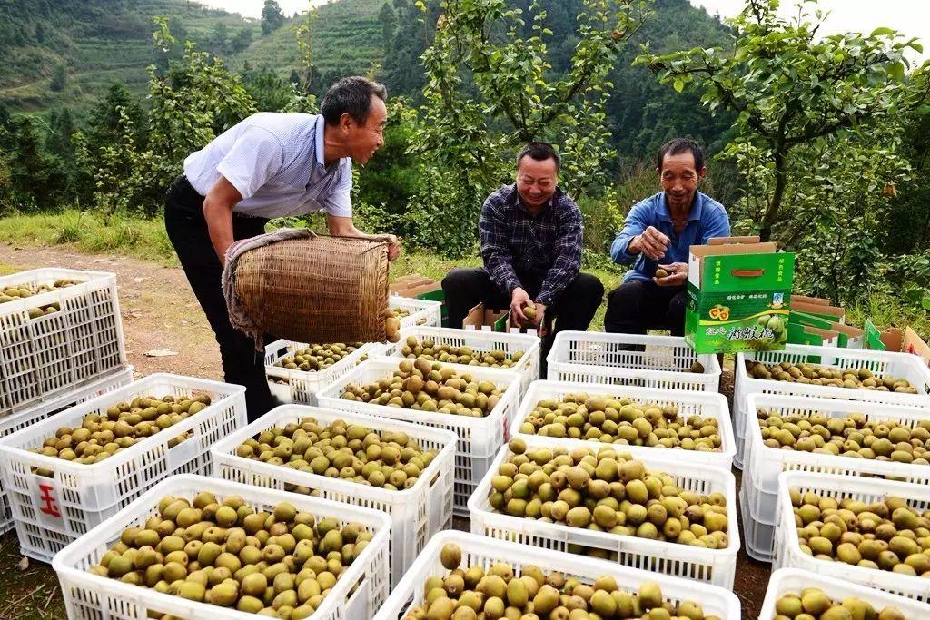 眉县猕猴桃产地今日有雨