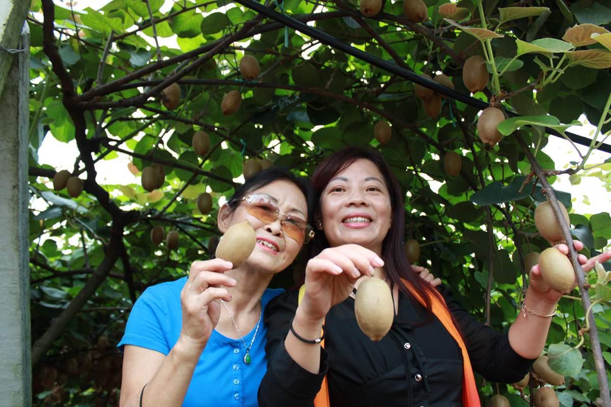 批发销售陕西省猕猴桃。201812月