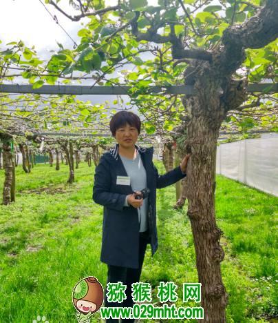 贵州猕猴桃种植技术专家唐冬梅介绍