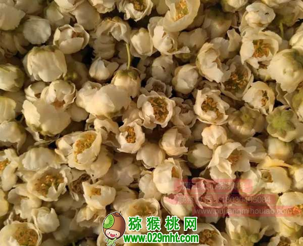 猕猴桃花粉收集、烘干、使用、干粉授粉法