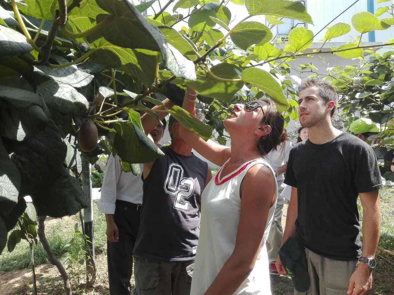 陕西省猕猴桃产地环境值得信赖