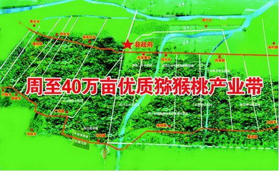 金周十里地猕猴桃成为周至猕猴桃信息网2.0