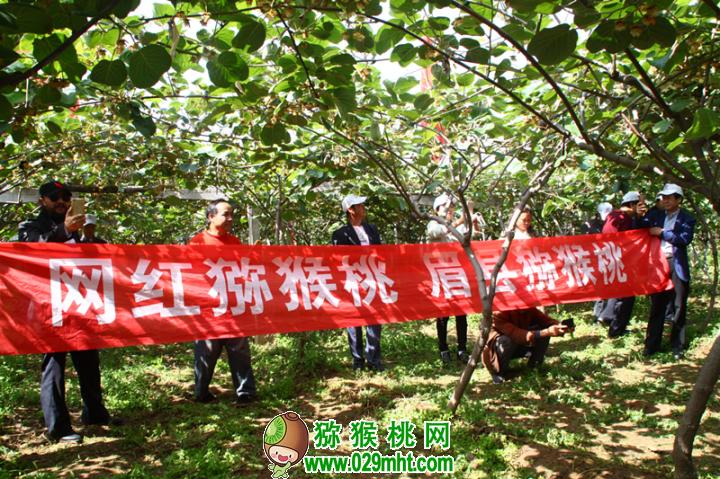 眉县第一届猕猴桃园现场直播分享会成功举办
