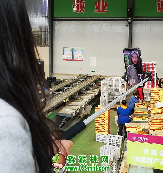 火了!网红+直播推介眉县猕猴桃 日销上百吨