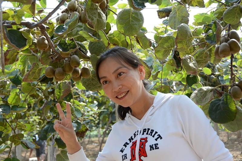 预售周至县徐香猕猴桃,预定有优惠