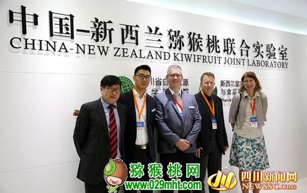 中国猕猴桃真的会称霸世界吗?中国猕猴桃和新西兰奇异果的恩怨情仇