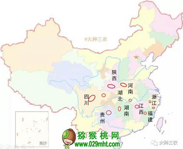 中国猕猴桃产业你真弄明白了吗?几个问题值得深思?