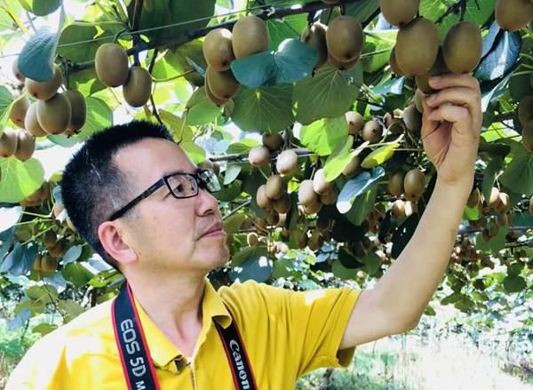 中国园艺学会猕猴桃分会秘书长 姜正旺老师