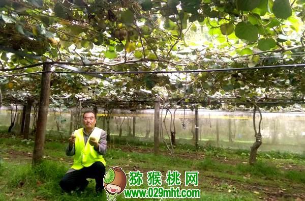 郝峻岭 周至县猕猴桃产业协会 秘书长《关于今冬明春猕猴桃市场形势之我见》