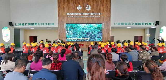 用什么助推陕西猕猴桃产业提质增效?