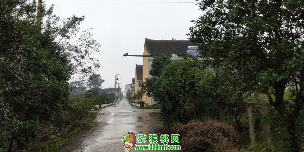 中国周至猕猴桃美丽乡村图片