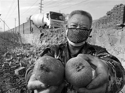 """猕猴桃咋成""""水泥色"""" 混凝土路成""""污染源"""" 果农要戴口罩"""