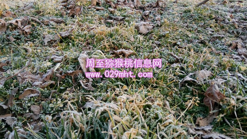 猕猴桃苗怕霜冻吗?