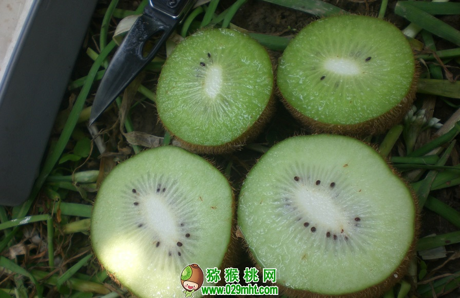 2017年9月3日眉县猕猴桃价格