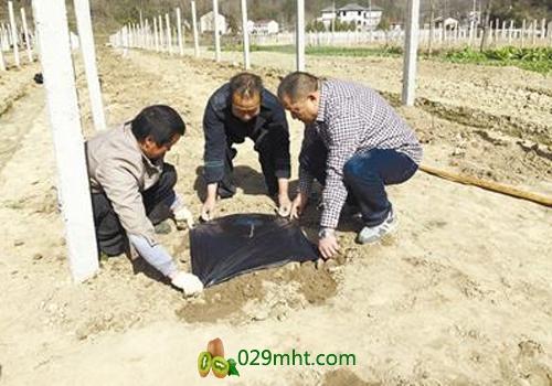谷城县南河镇苏区村25亩农田 农民