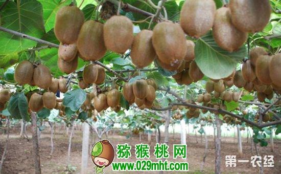 陕西眉县:多措并举推动农业产业标准化生产