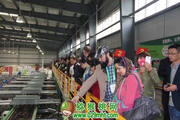 眉县猕猴桃标准化基地建设成果受到专家称赞