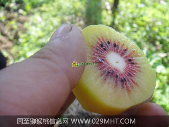 陕西红心猕猴桃图片