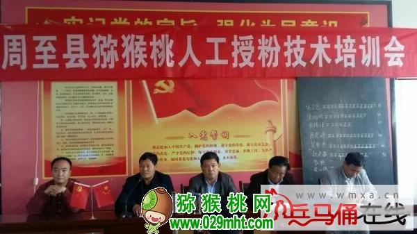 周至县果业局在富仁镇渭兴村开展猕猴桃春季管理及人工授粉专场技术培训会