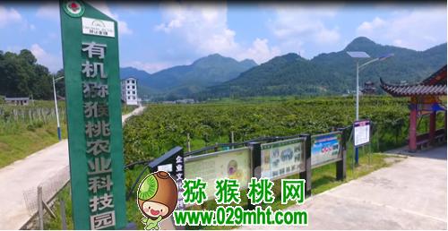 贵州村华秋实农业公司:有机猕猴桃产销两旺 助力脱贫