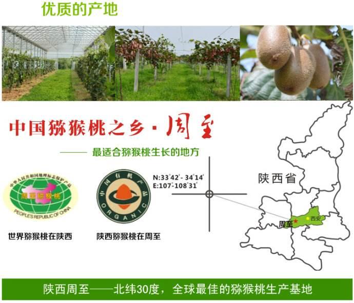 七曲村大力发展猕猴桃电子商务水平