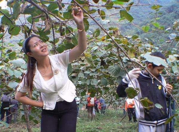 猴上树猕猴桃