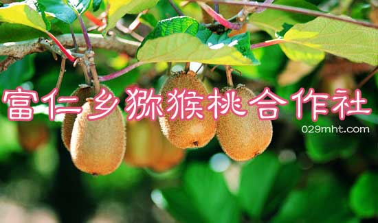 富仁乡猕猴桃合作社