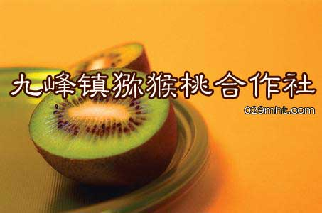 九峰镇猕猴桃合作社