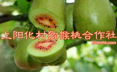 上阳化村猕猴桃合作社