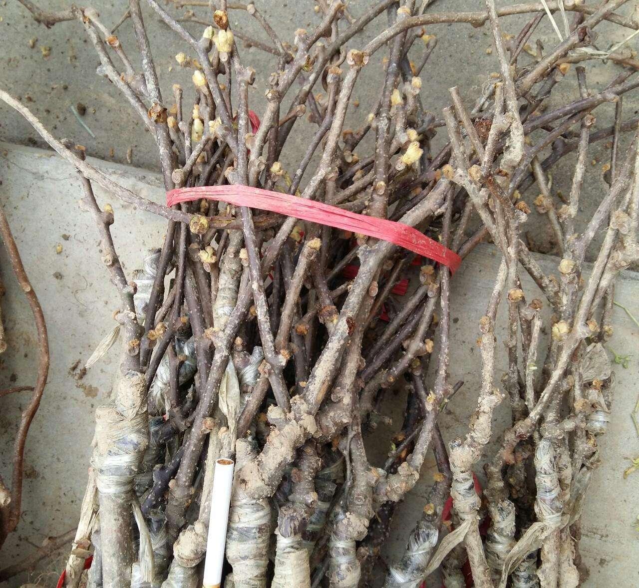 供应西安市原产地猕猴桃,产地直销