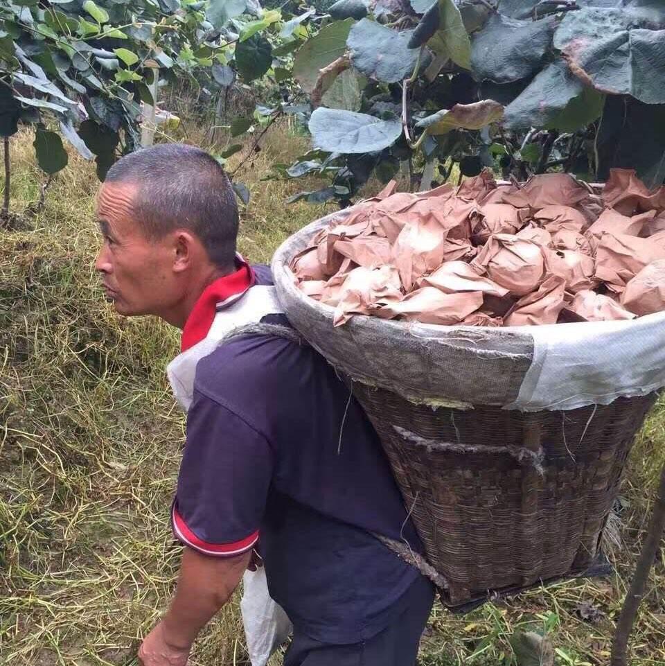 供应陕西省猕猴桃套袋专用袋