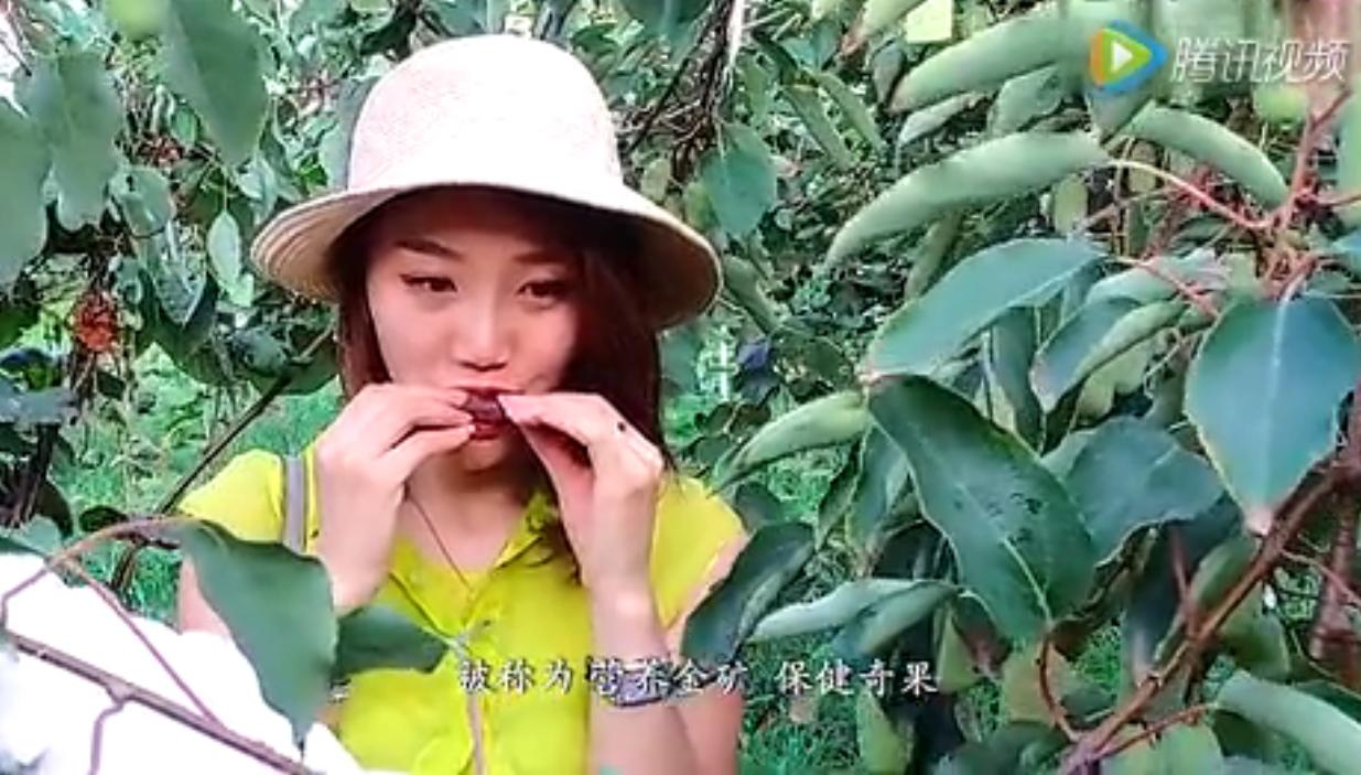 陕西秦岭周至猕猴桃形象宣传片