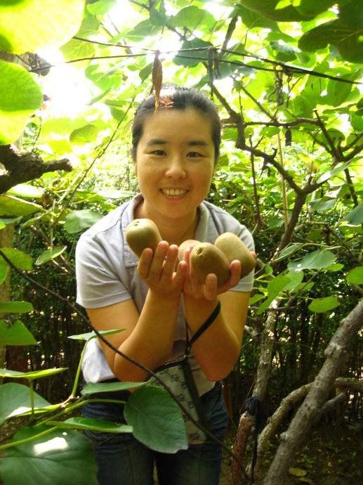 陕西翠香猕猴桃,产地直销,有机一件代发