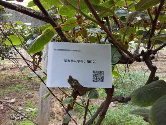 <a href=http://www.029mht.com/zhouzhimihoutao/ target=_blank class=infotextkey>周至猕猴桃</a>