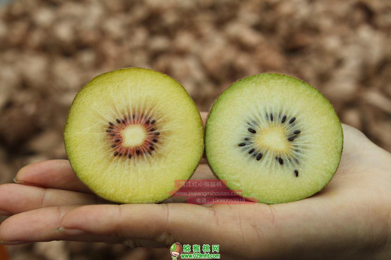 """猕猴桃专利品种""""东红""""在四川蒲江县规模化种植"""
