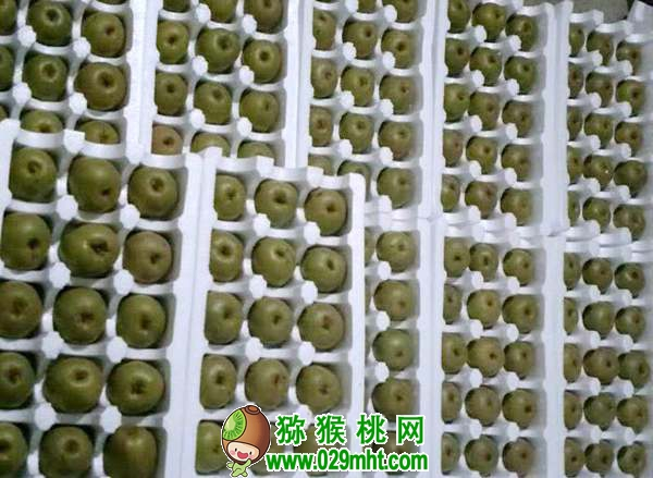 <a href=http://www.029mht.com/mht/hongxin/ target=_blank class=infotextkey>红心猕猴桃</a>火热上市了