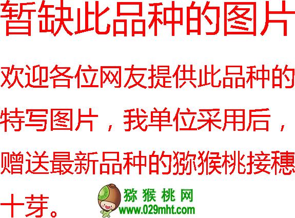 猕猴桃优良品种介绍 粤引2205 又叫早鲜