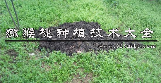 周至猕猴桃信息网教你猕猴桃四季施肥技巧