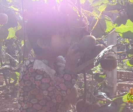 周至猕猴桃山珍成长过程写真画报