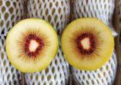 陕西眉县一名网友分享的种植猕猴桃心路历程