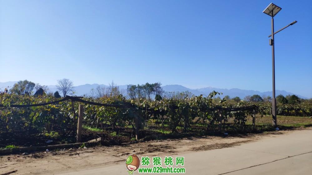 大美中国猕猴桃之乡猕猴桃君带你去陕西西安看看猕猴桃风景