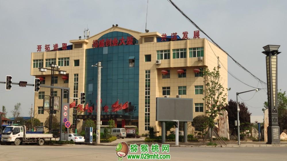 带你走进中国西部苗木花卉市场1