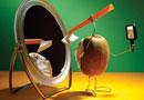 猕猴桃企业(个人)店铺托管服务