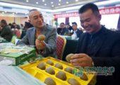 昆明市场上卖的猕猴桃有80%都产自陕西周至县