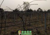 周至县七曲村猕猴桃村扶贫成功展示