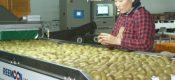 国际化市场的周至猕猴桃