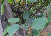 眉县猕猴桃6月生长汇报,走进猕猴桃图片101期